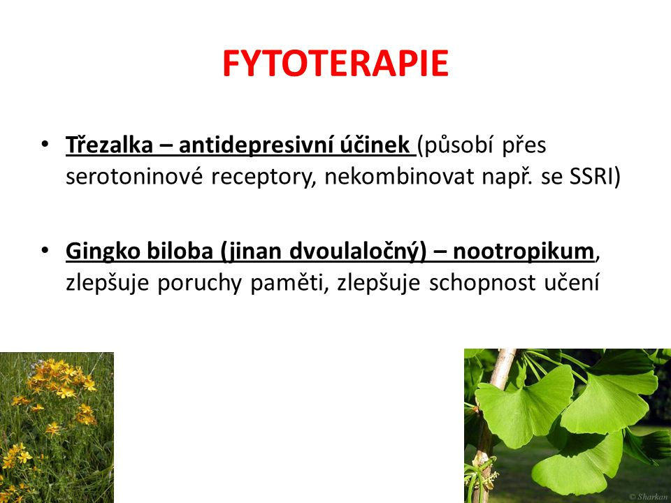 FYTOTERAPIE Třezalka – antidepresivní účinek (působí přes serotoninové receptory, nekombinovat např. se SSRI)