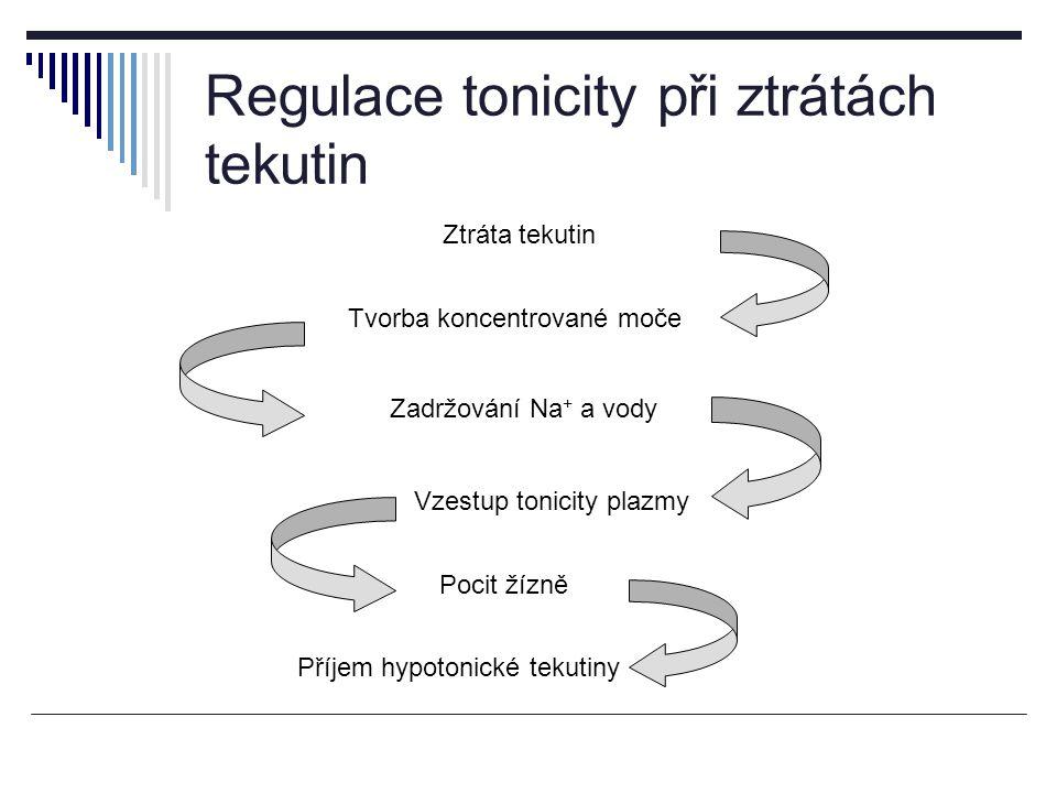 Regulace tonicity při ztrátách tekutin