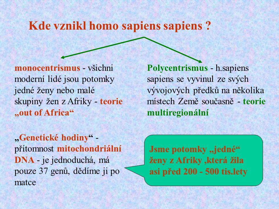 Kde vznikl homo sapiens sapiens