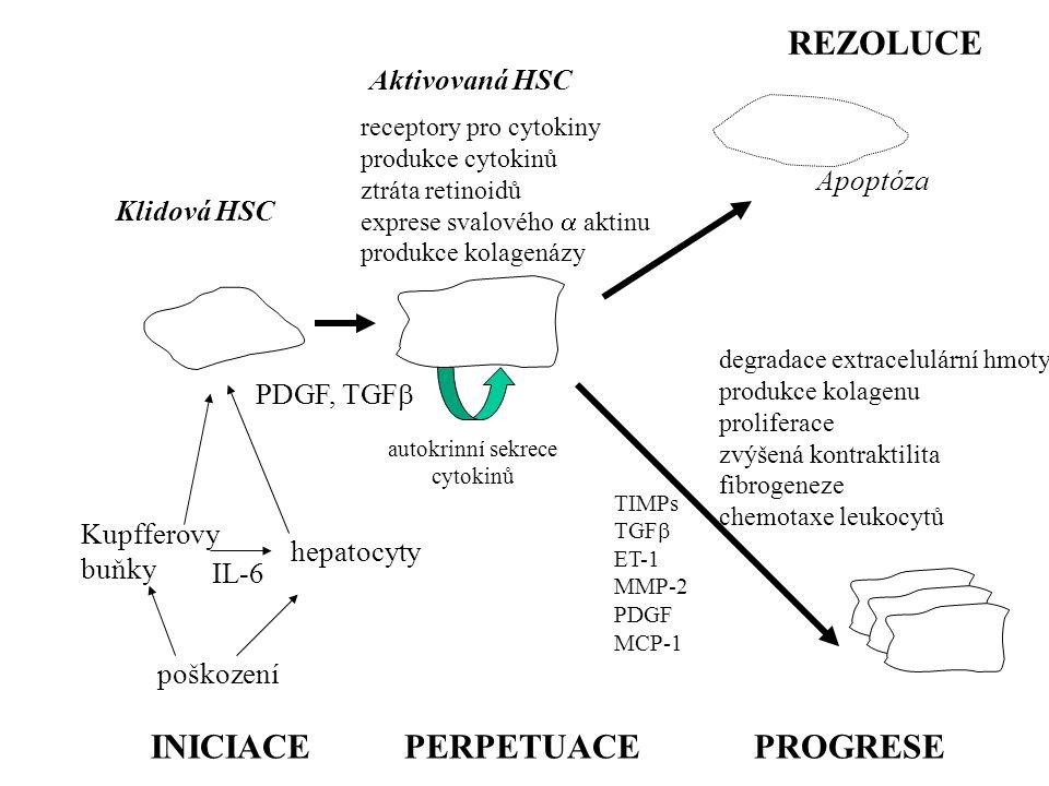 autokrinní sekrece cytokinů