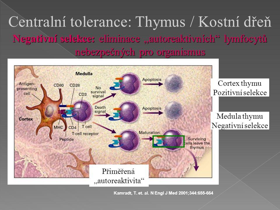 Centralní tolerance: Thymus / Kostní dřeň