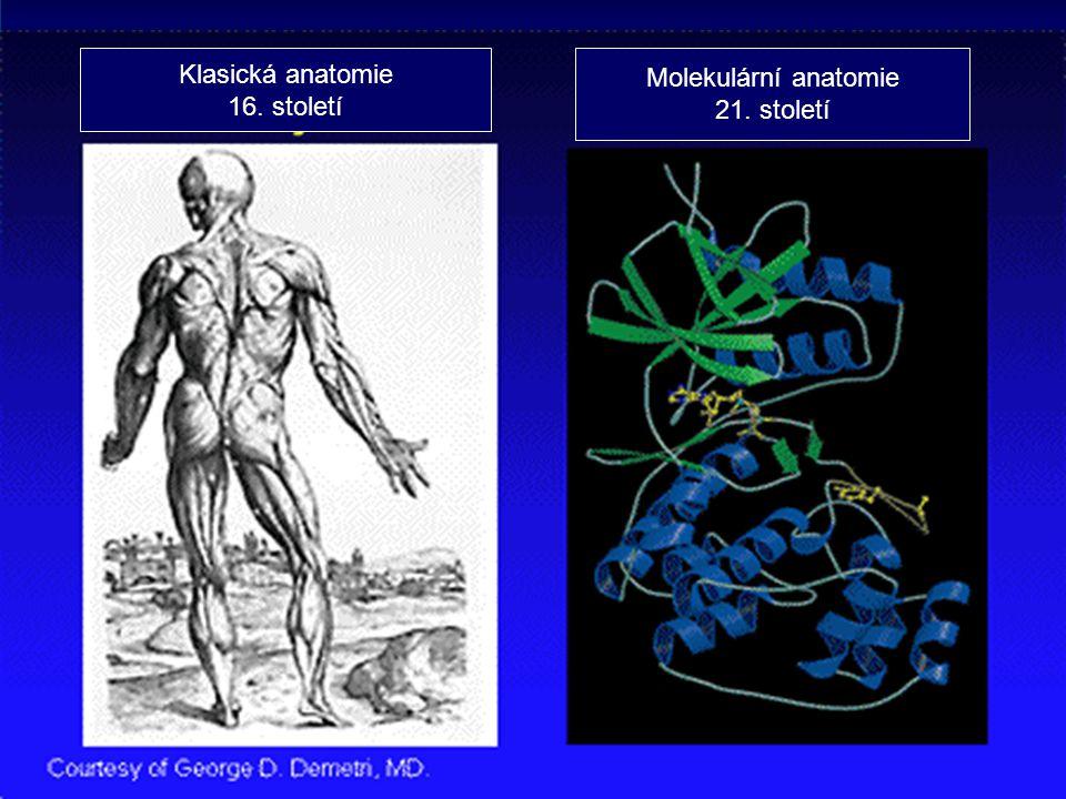 Klasická anatomie 16. století Molekulární anatomie 21. století