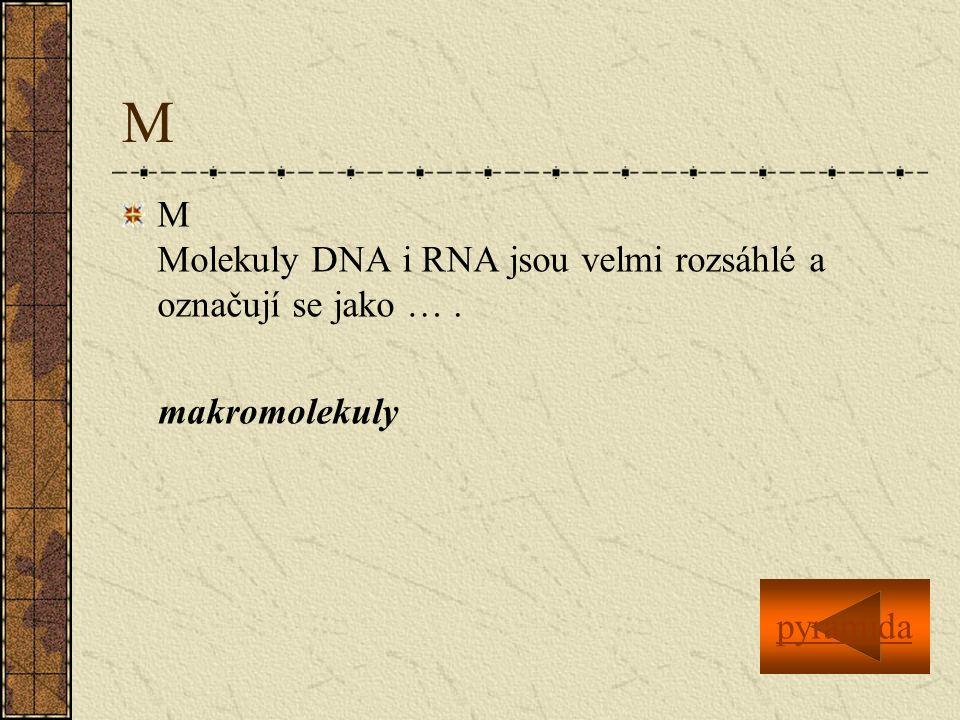 M M Molekuly DNA i RNA jsou velmi rozsáhlé a označují se jako … .