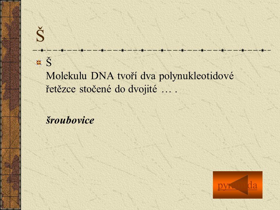 Š Š Molekulu DNA tvoří dva polynukleotidové řetězce stočené do dvojité … .
