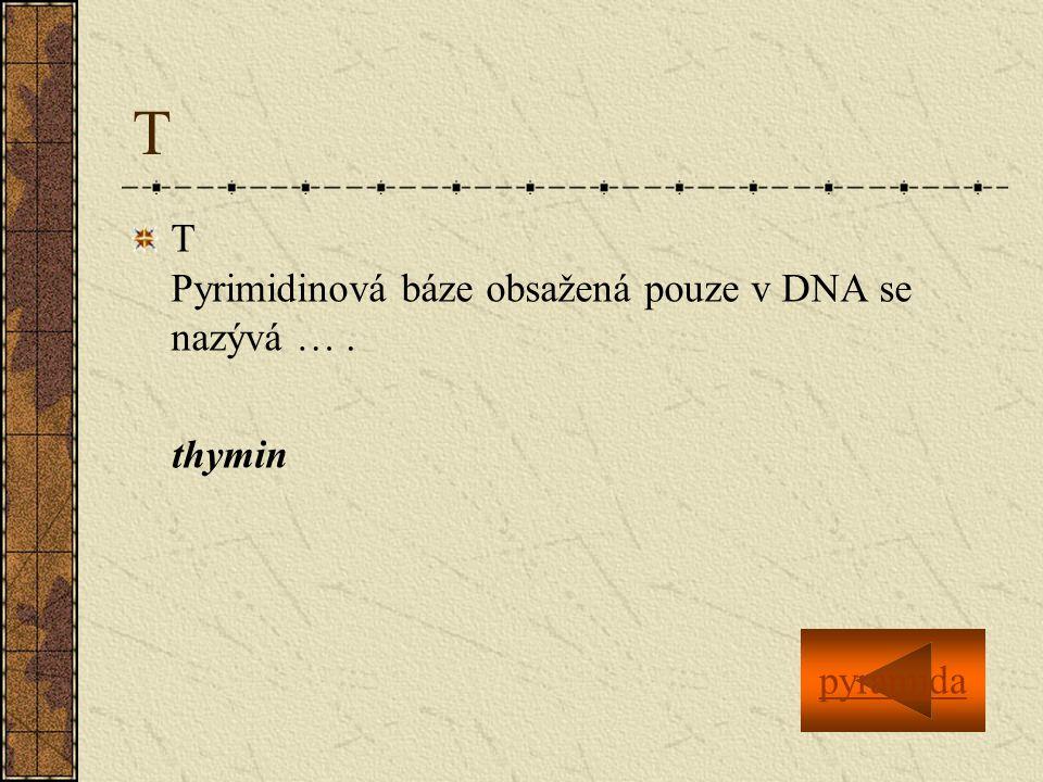 T T Pyrimidinová báze obsažená pouze v DNA se nazývá … . thymin