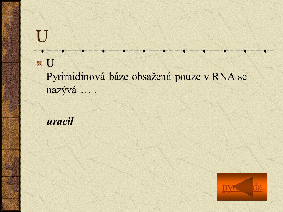 U U Pyrimidinová báze obsažená pouze v RNA se nazývá … . uracil