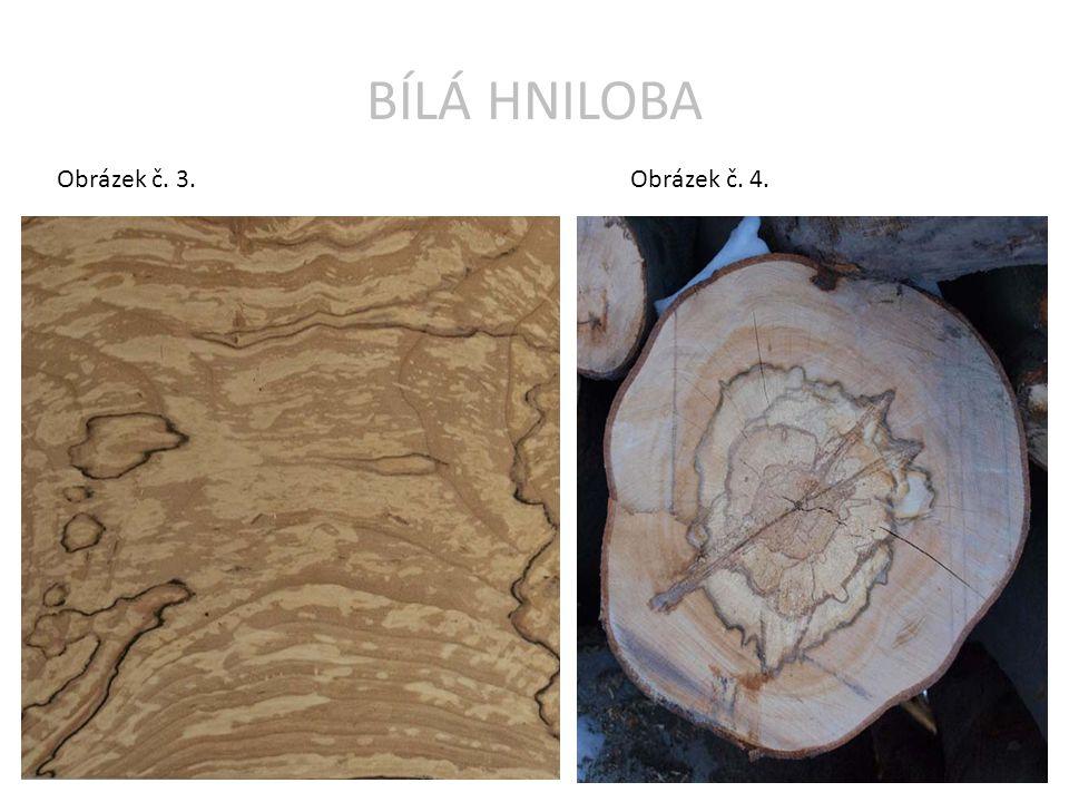 BÍLÁ HNILOBA Obrázek č. 3.