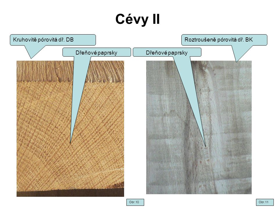 Cévy II Kruhovitě pórovitá dř. DB Roztroušeně pórovitá dř. BK