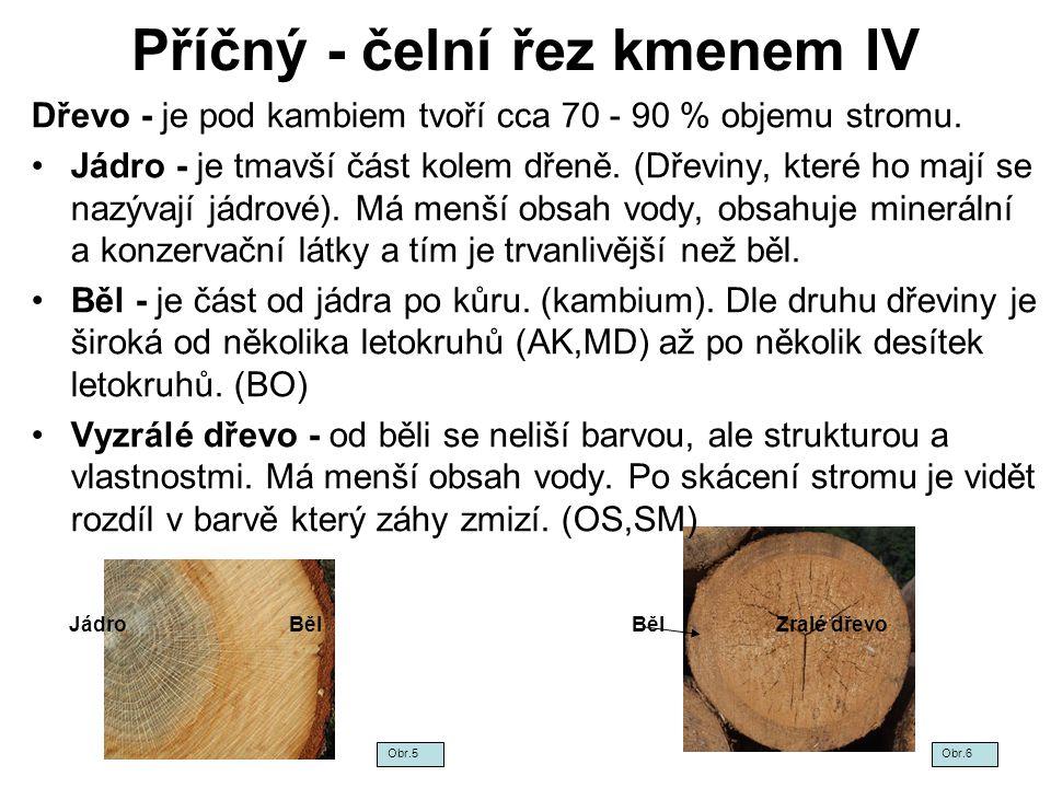 Příčný - čelní řez kmenem IV