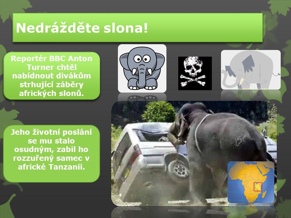 Nedrážděte slona! Reportér BBC Anton Turner chtěl nabídnout divákům strhující záběry afrických slonů.