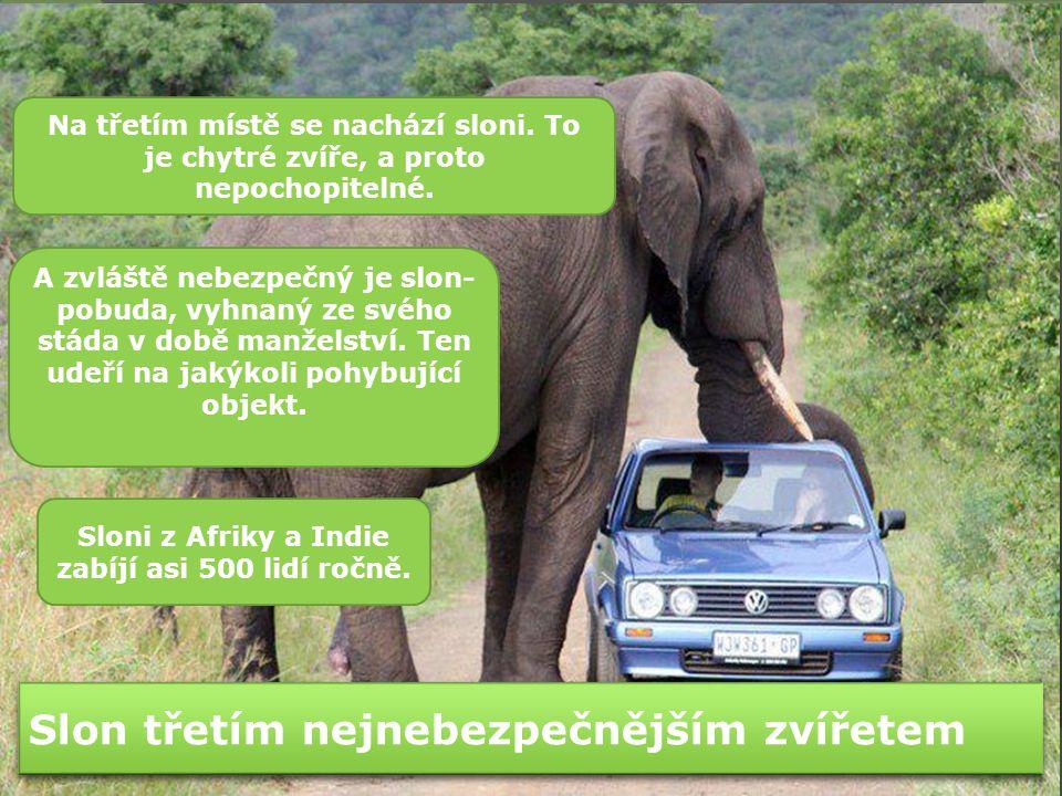 Slon třetím nejnebezpečnějším zvířetem