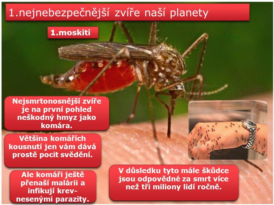 1.nejnebezpečnější zvíře naší planety