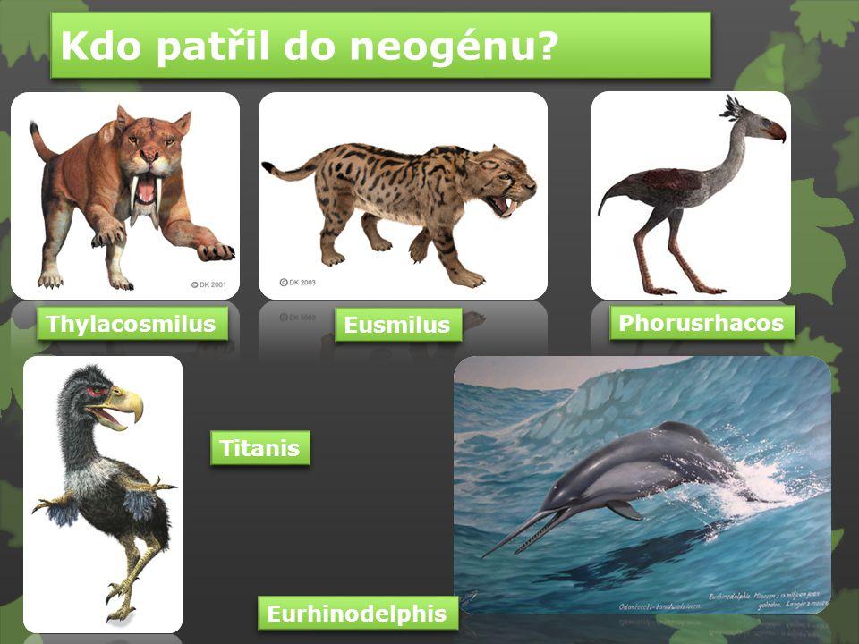 Kdo patřil do neogénu Thylacosmilus Eusmilus Phorusrhacos Titanis
