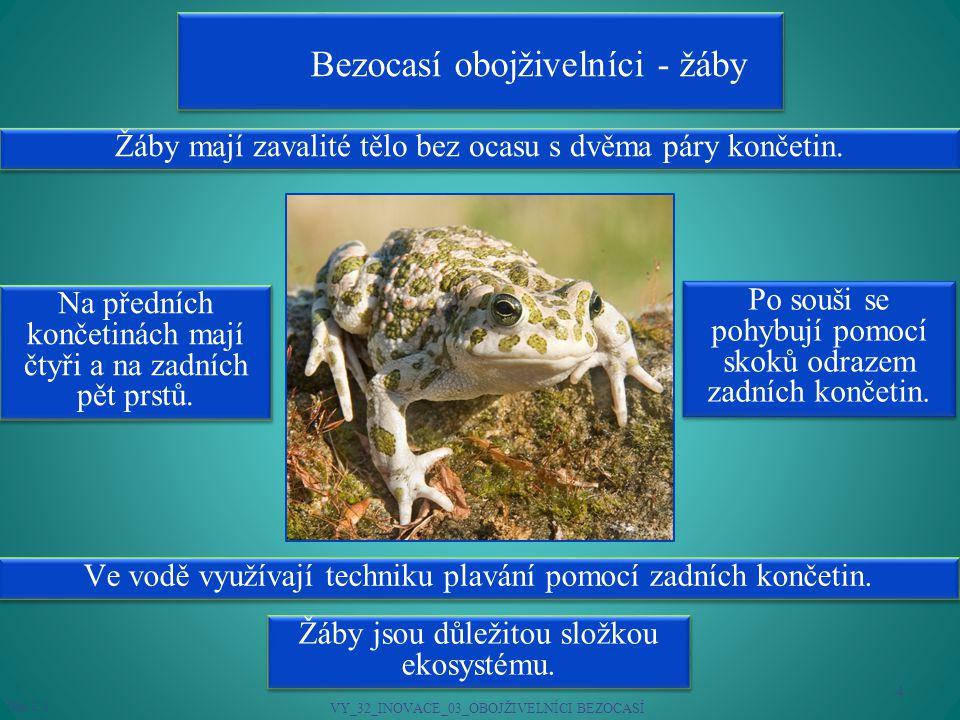 Bezocasí obojživelníci - žáby