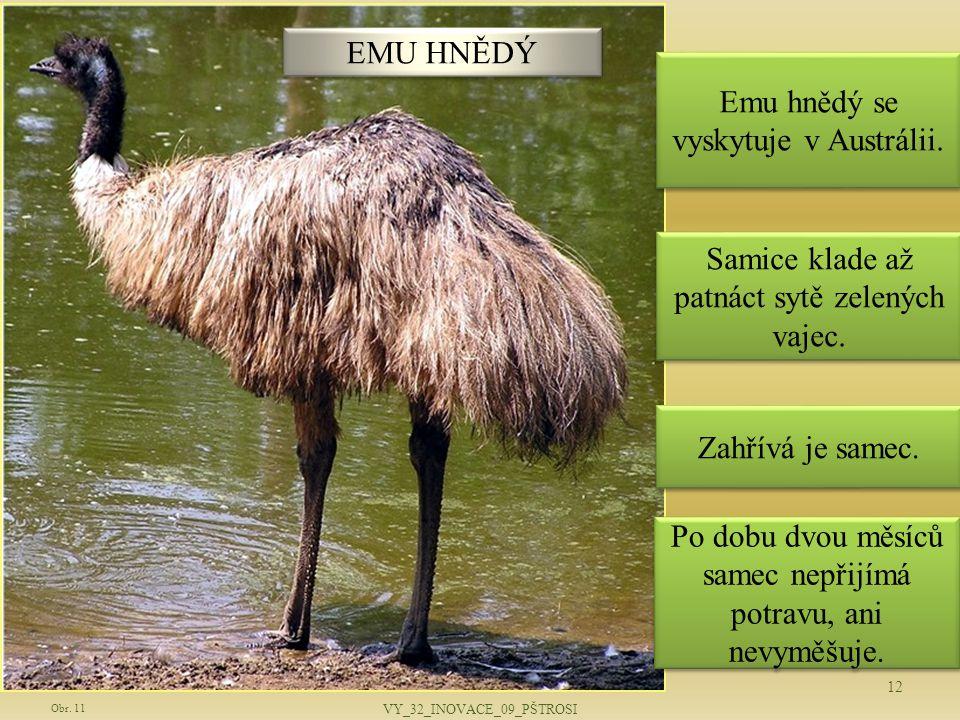 Emu hnědý se vyskytuje v Austrálii.