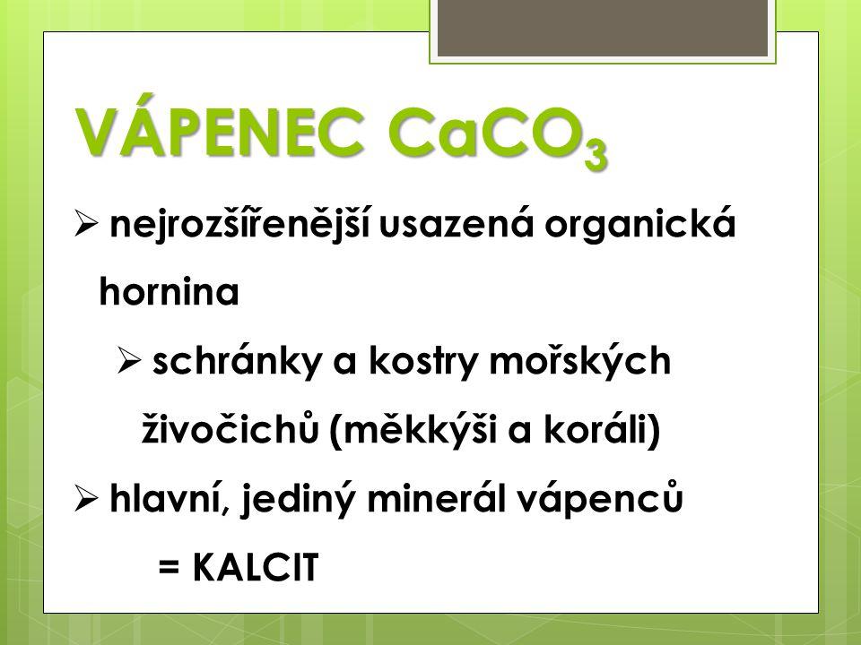 VÁPENEC CaCO3 nejrozšířenější usazená organická hornina