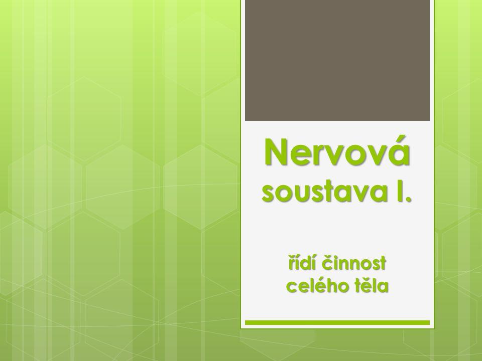 Nervová soustava I. řídí činnost celého těla