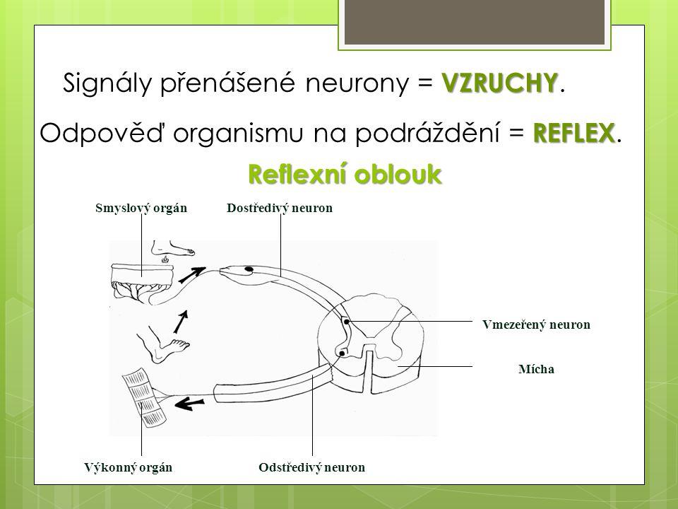 Odpověď organismu na podráždění = REFLEX.