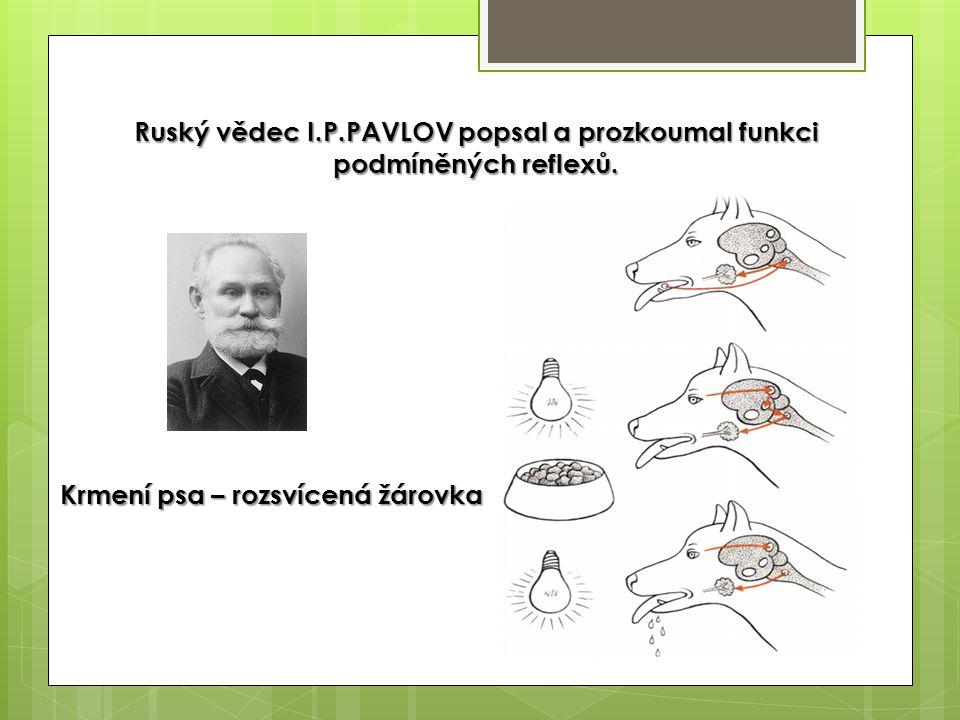 Ruský vědec I.P.PAVLOV popsal a prozkoumal funkci podmíněných reflexů.