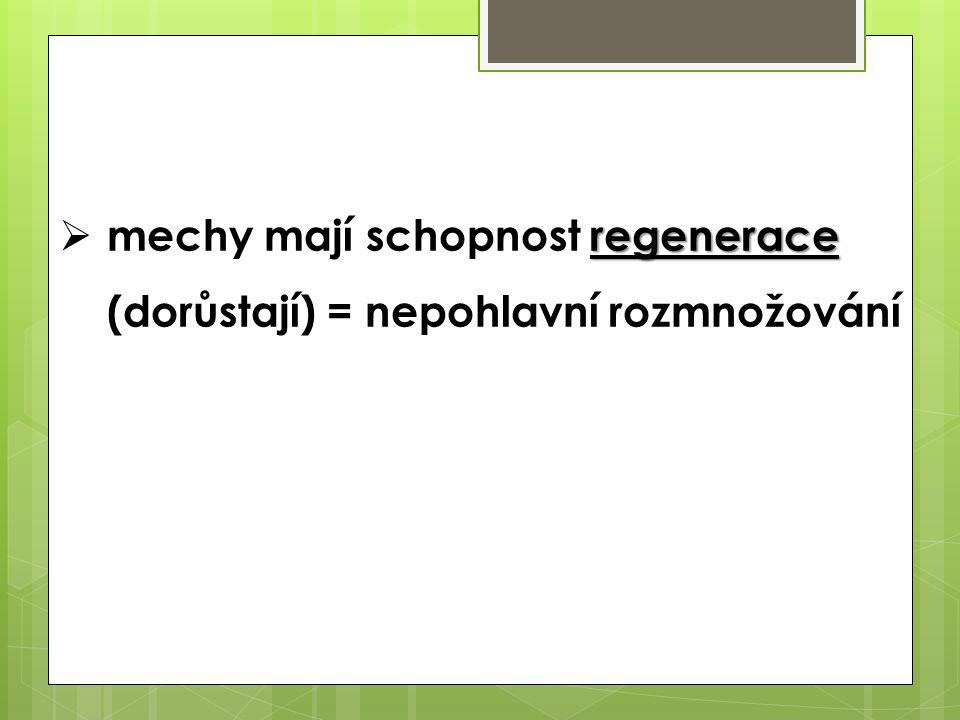 mechy mají schopnost regenerace (dorůstají) = nepohlavní rozmnožování
