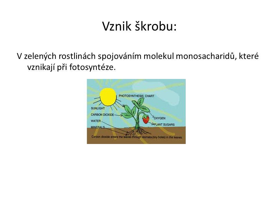 Vznik škrobu: V zelených rostlinách spojováním molekul monosacharidů, které vznikají při fotosyntéze.