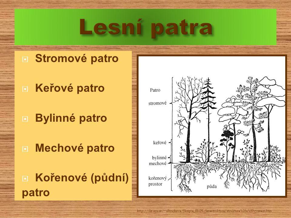 Lesní patra Stromové patro Keřové patro Bylinné patro Mechové patro