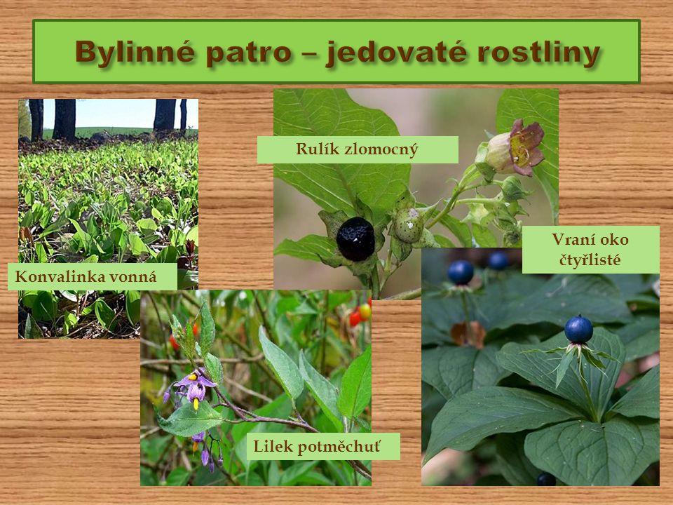 Bylinné patro – jedovaté rostliny