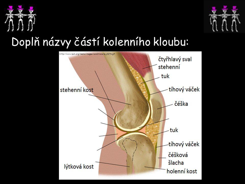 Doplň názvy částí kolenního kloubu: