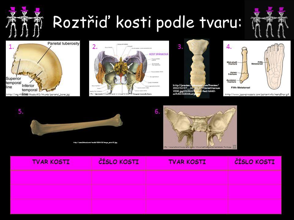Roztřiď kosti podle tvaru: