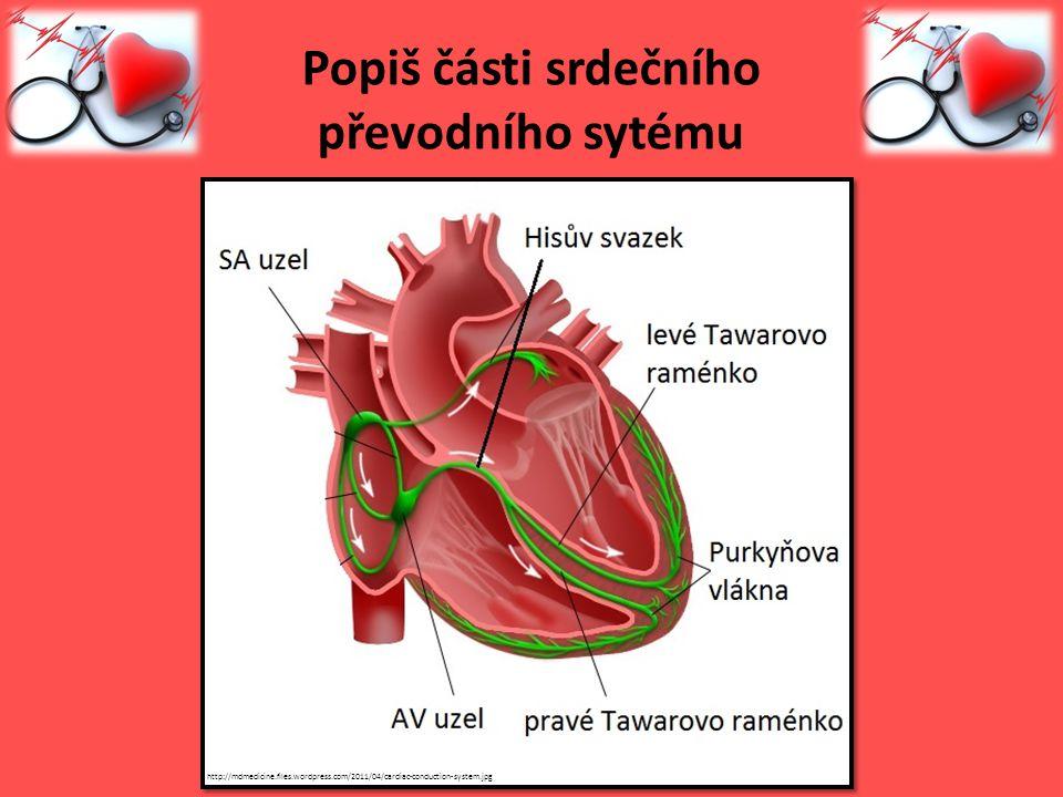 Popiš části srdečního převodního sytému