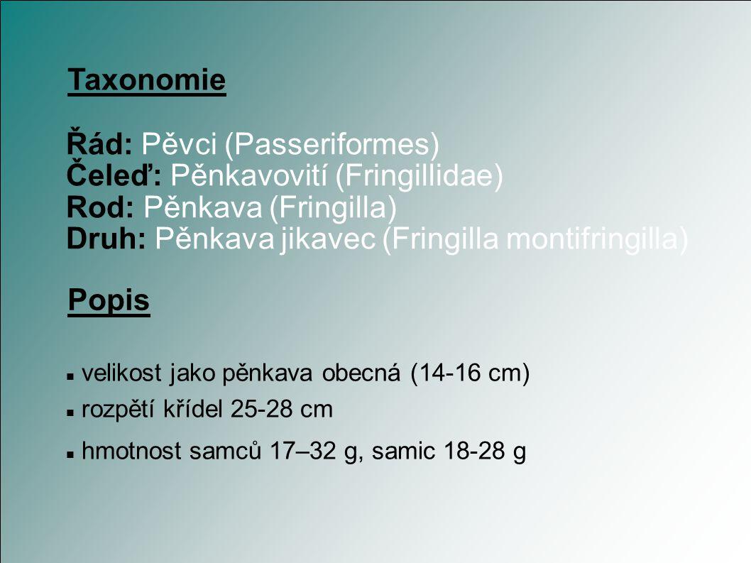 Řád: Pěvci (Passeriformes) Čeleď: Pěnkavovití (Fringillidae)