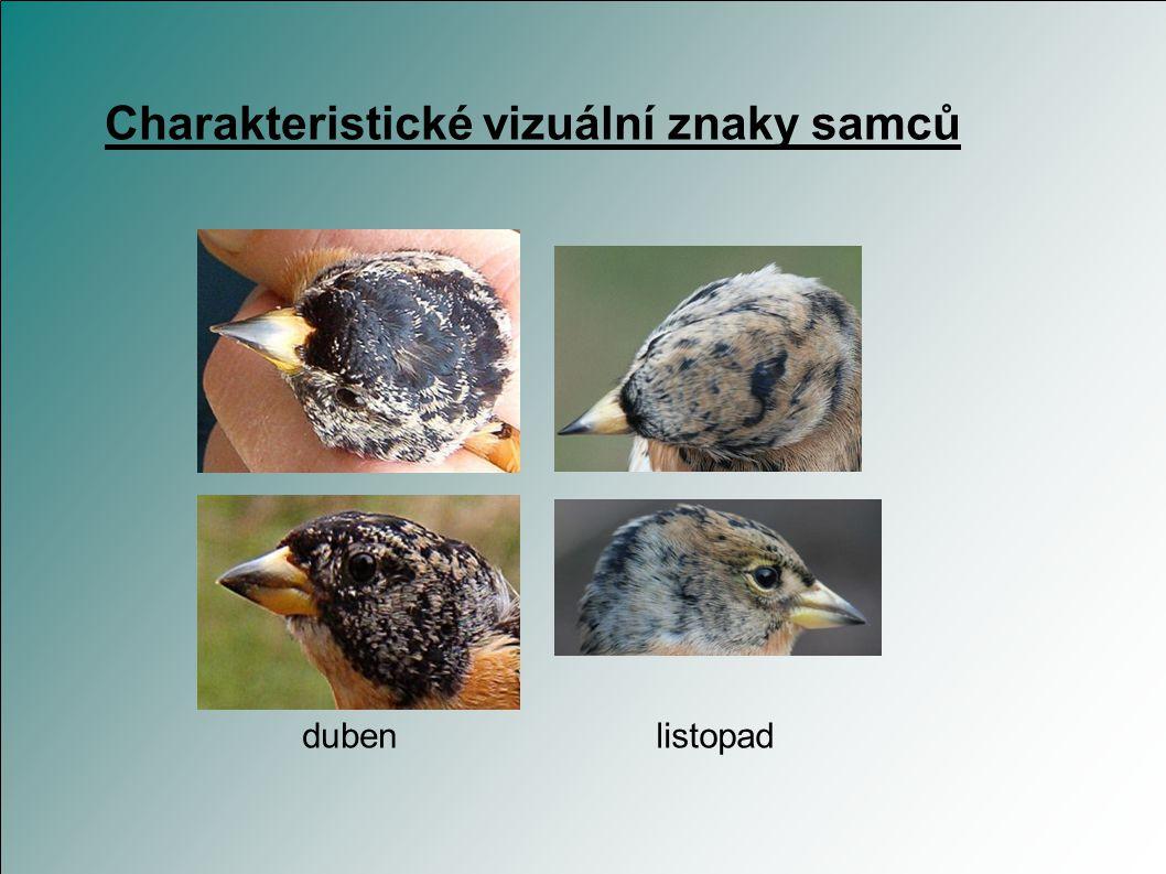 Charakteristické vizuální znaky samců