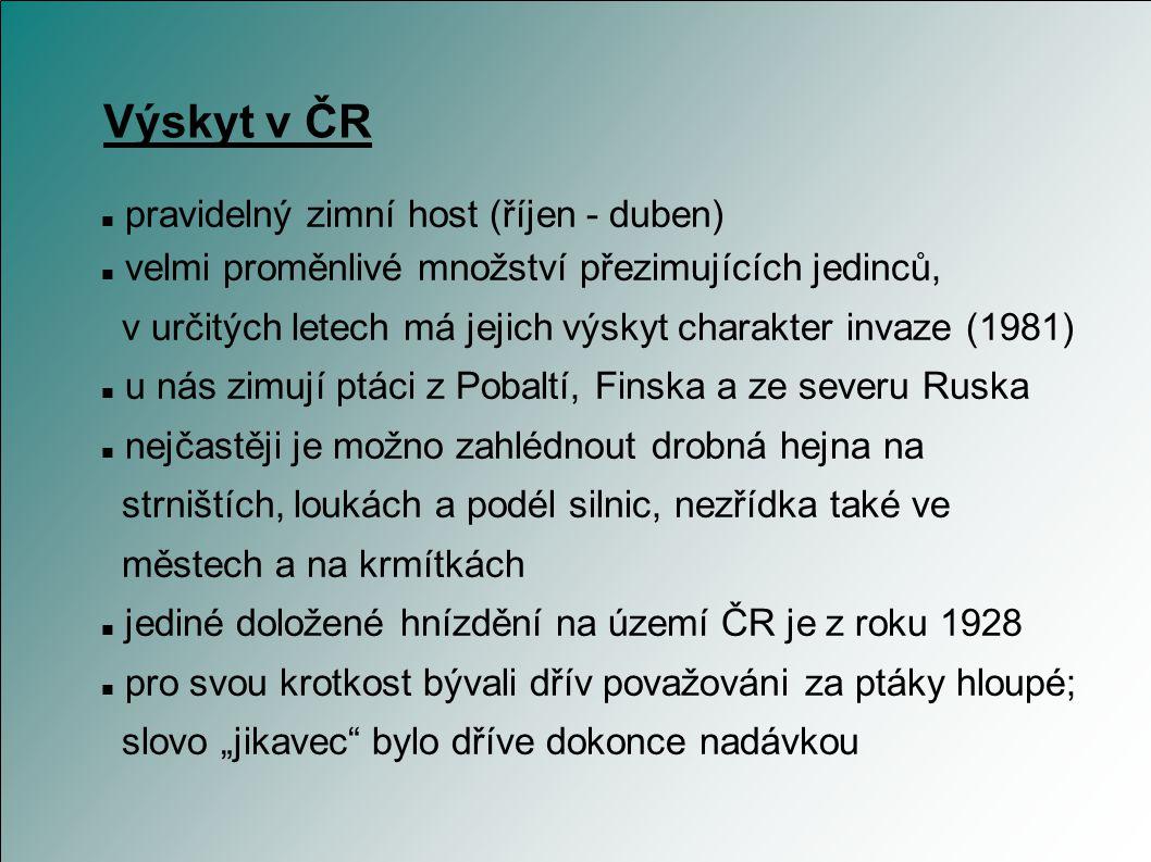 Výskyt v ČR pravidelný zimní host (říjen - duben)