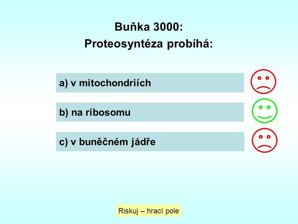 Proteosyntéza probíhá: