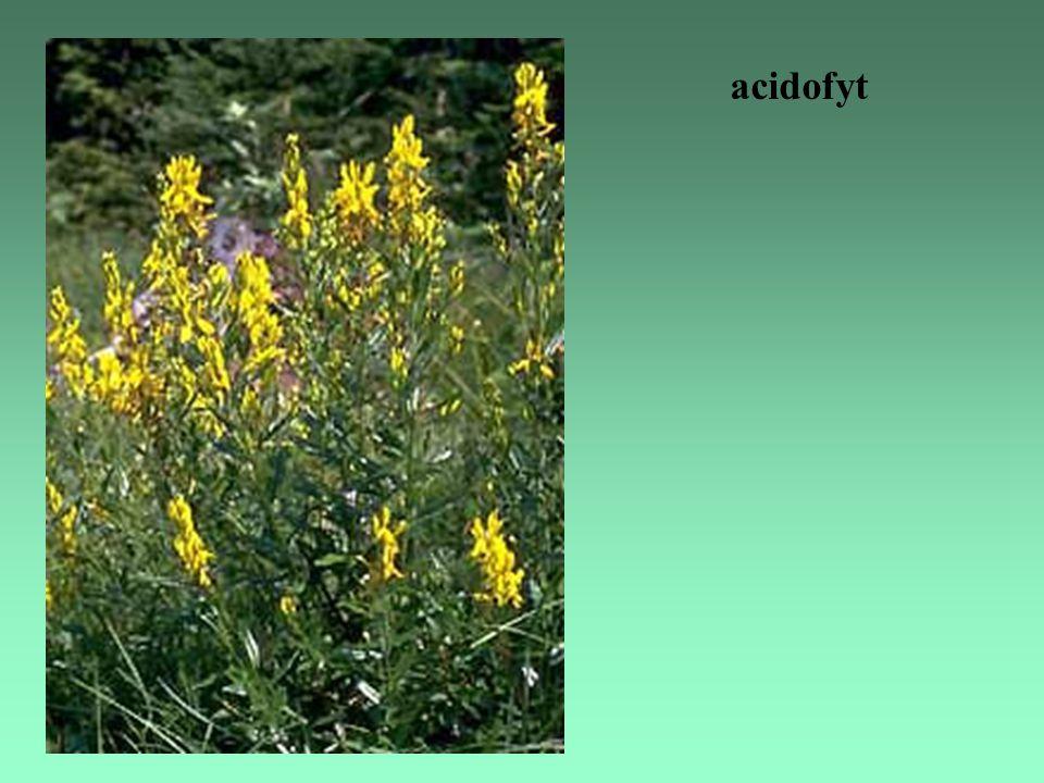 acidofyt