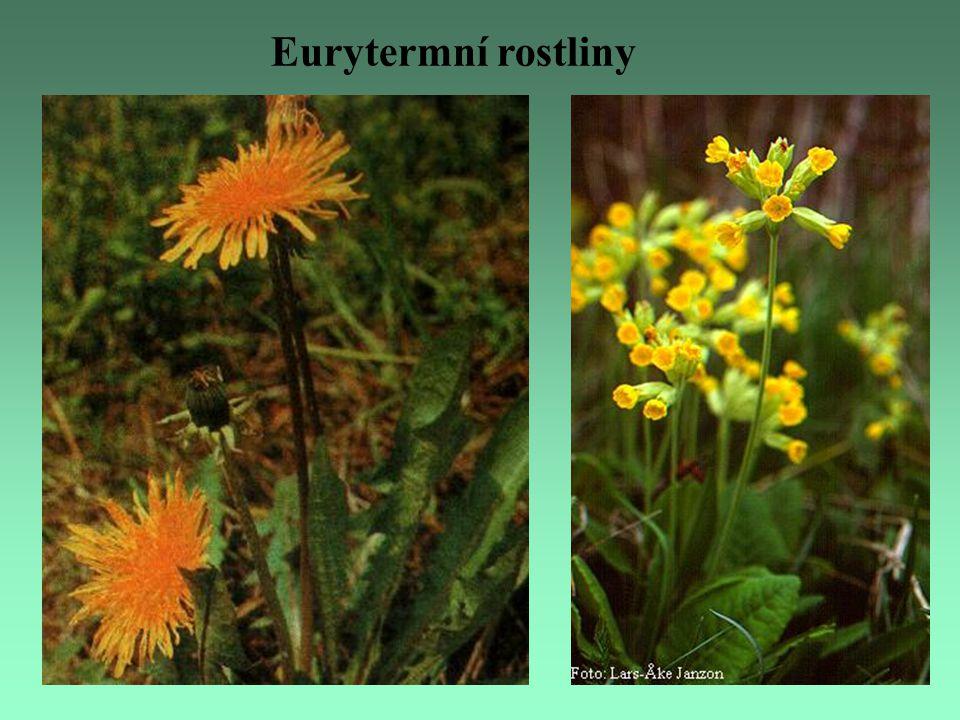 Eurytermní rostliny