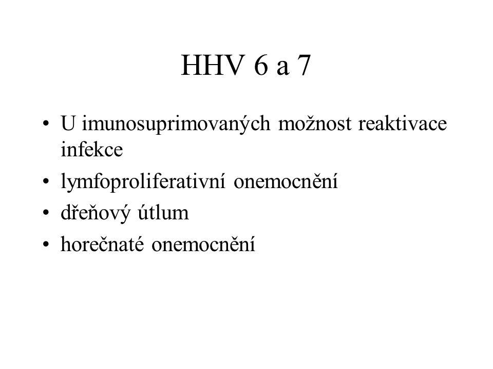HHV 6 a 7 U imunosuprimovaných možnost reaktivace infekce