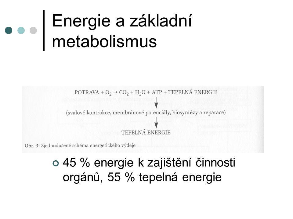 Energie a základní metabolismus