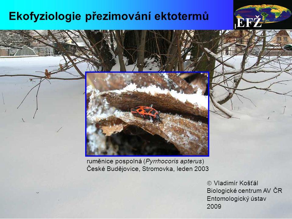 EFŽ Ekofyziologie přezimování ektotermů