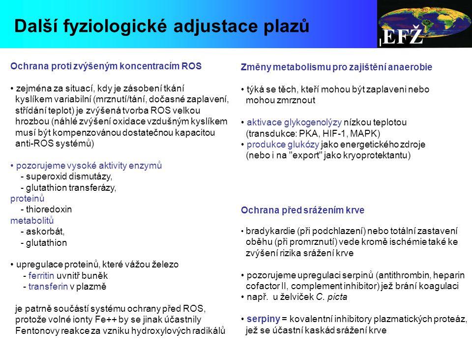 EFŽ Další fyziologické adjustace plazů