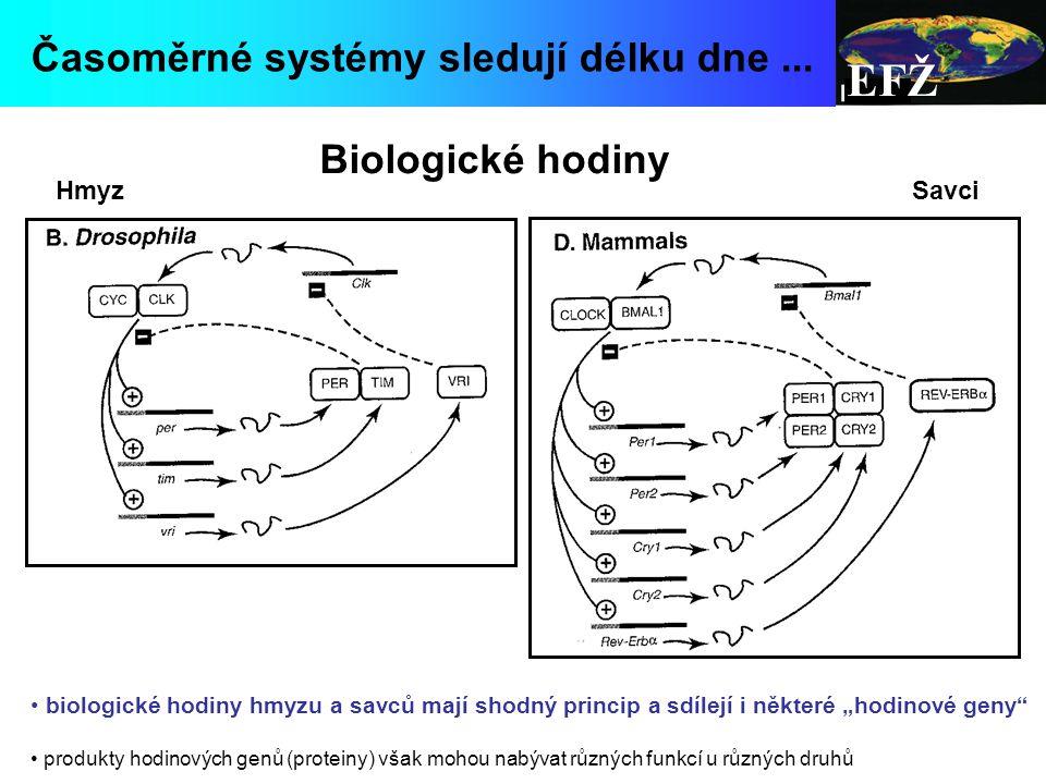 EFŽ Časoměrné systémy sledují délku dne ... Biologické hodiny Hmyz