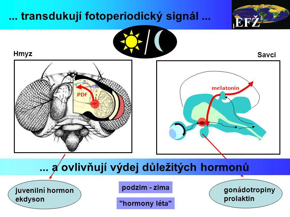 ... a ovlivňují výdej důležitých hormonů