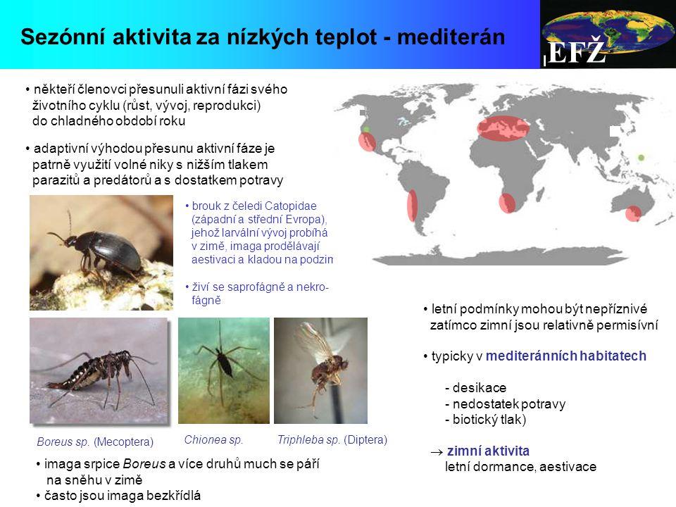 EFŽ Sezónní aktivita za nízkých teplot - mediterán