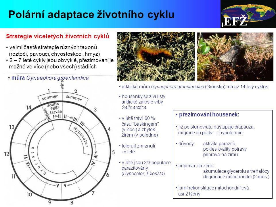 EFŽ Polární adaptace životního cyklu