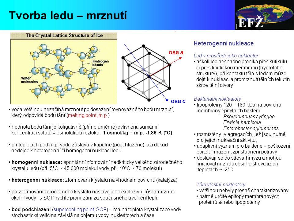 EFŽ Tvorba ledu – mrznutí Heterogenní nukleace osa a osa c