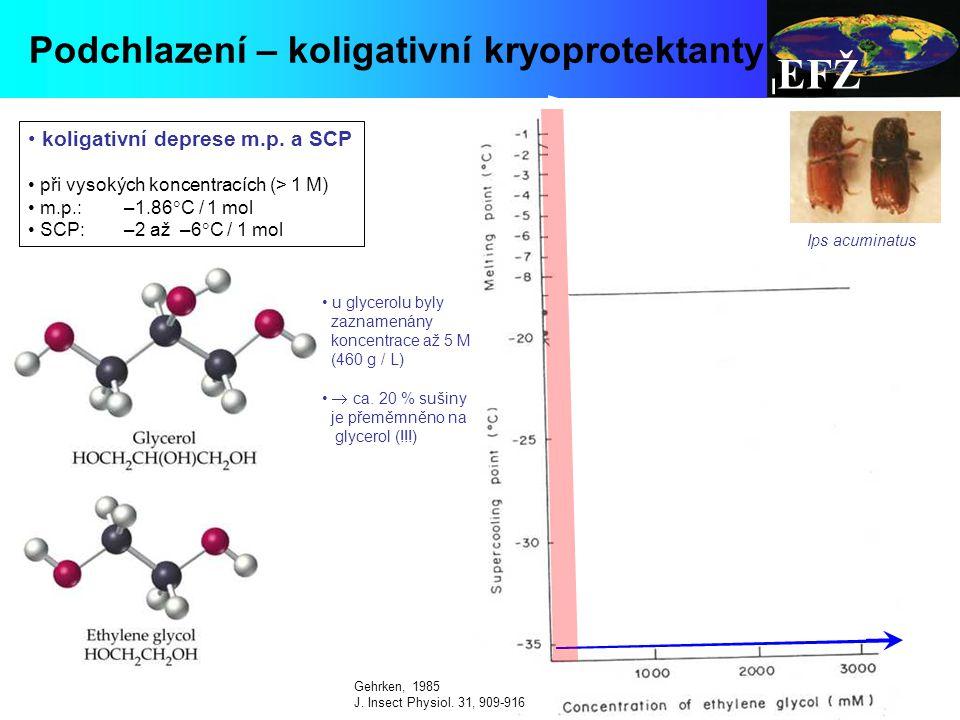 EFŽ Podchlazení – koligativní kryoprotektanty