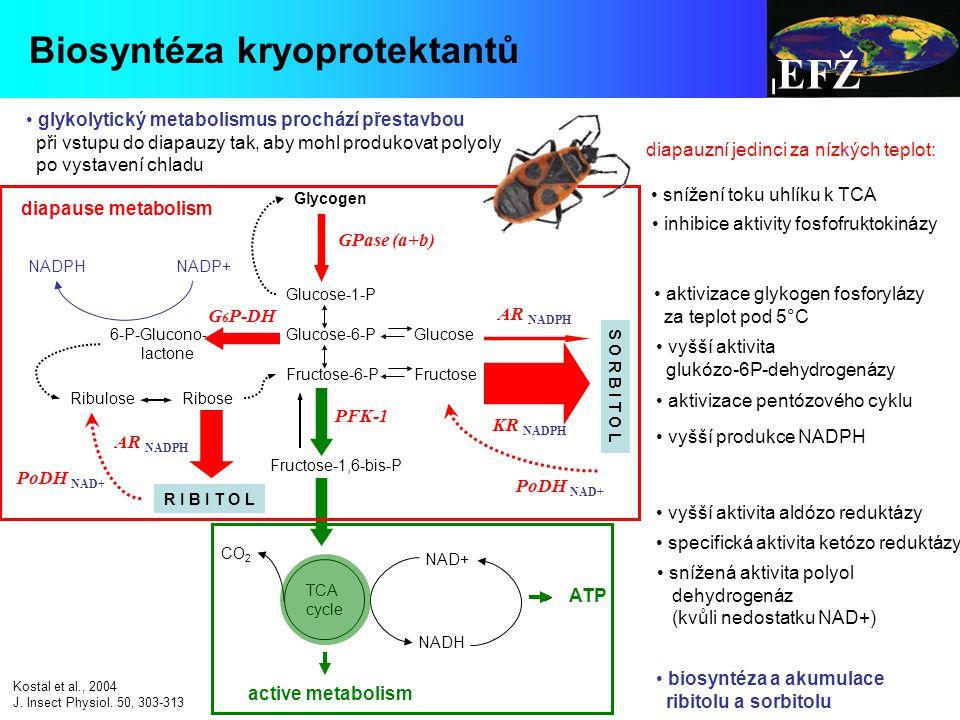 EFŽ Biosyntéza kryoprotektantů
