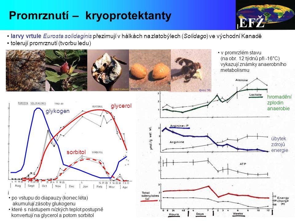 EFŽ Promrznutí – kryoprotektanty
