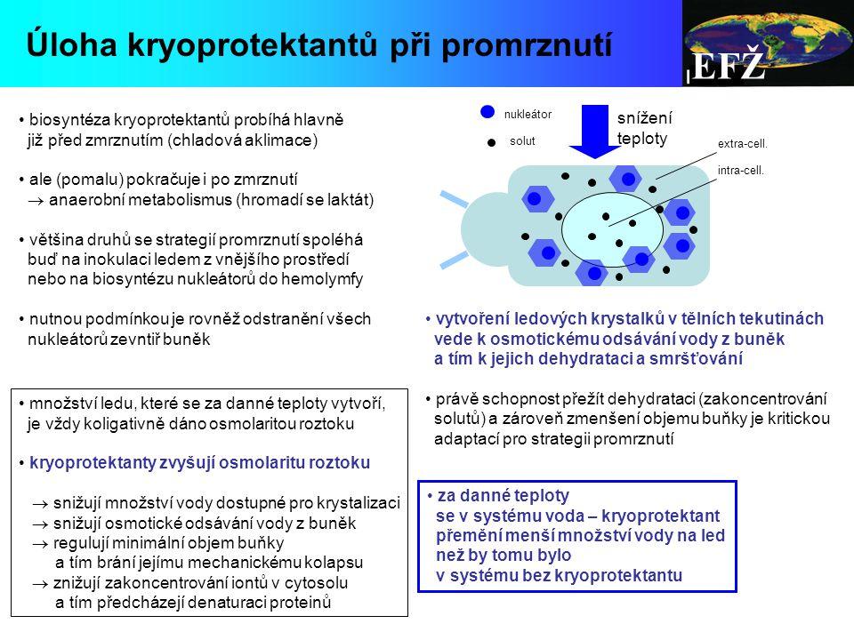 EFŽ Úloha kryoprotektantů při promrznutí