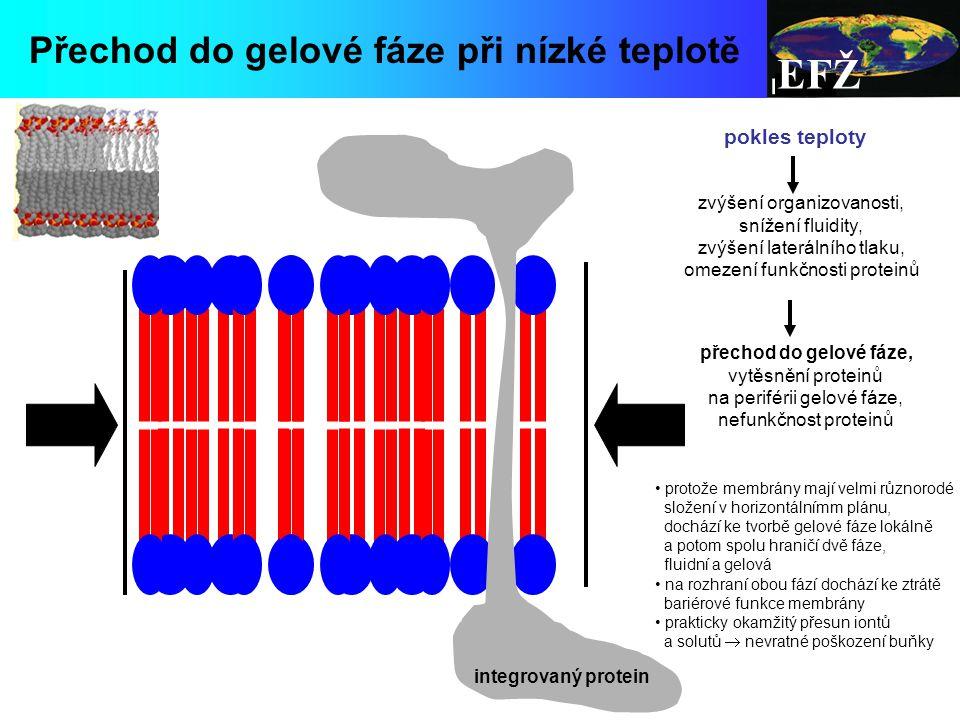 EFŽ Přechod do gelové fáze při nízké teplotě pokles teploty